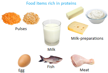 high protein diet meal plan