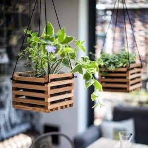 Planters Ideas for Indoor