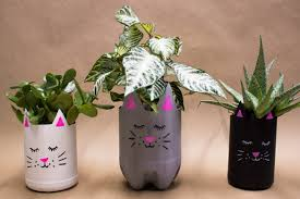 Plastic Bottle pots for plant
